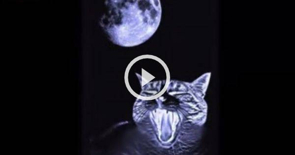 videos de bromas de fantasmas: